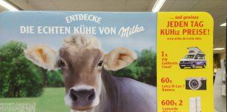 Milka Echte Kühe